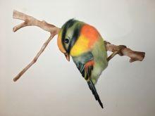 9-3:彩铅画-小鸟6