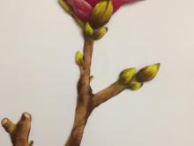 9-2:彩铅画-玉兰花4